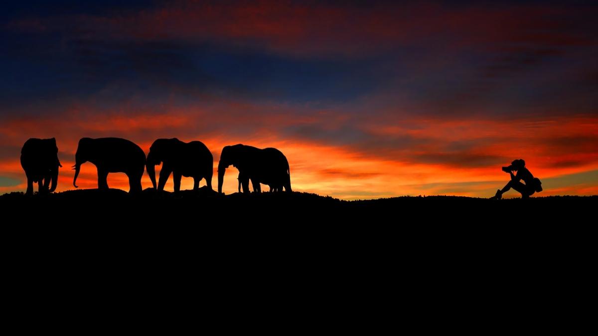 Sonnenuntergang Elefanten